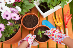 Gardening Tips on a Budget Waco Moms Blog
