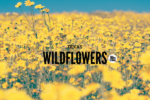 Wildflowers-Waco-Moms-Blog