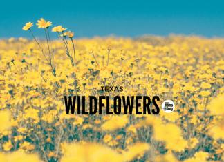 Wildflowers-Waco-Moms-Blog
