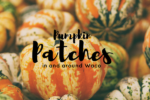 waco-moms-blog-pumpkin-patches-in-and-around-waco