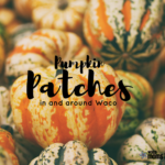 Pumpkin Patches In and Around Waco