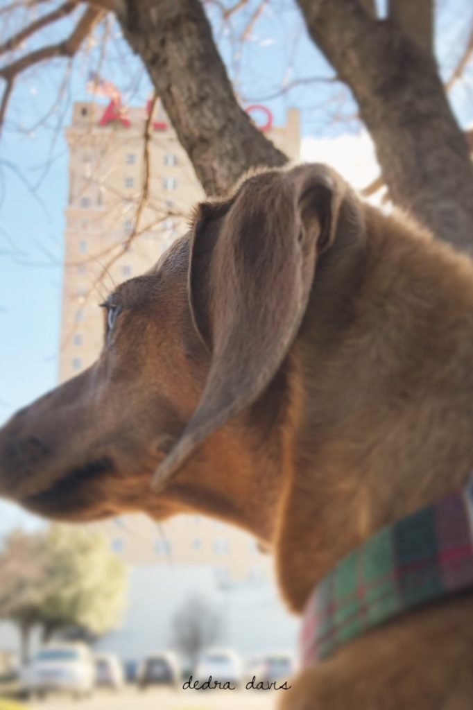 Waco Dog-Friendly Spots To Take Spot